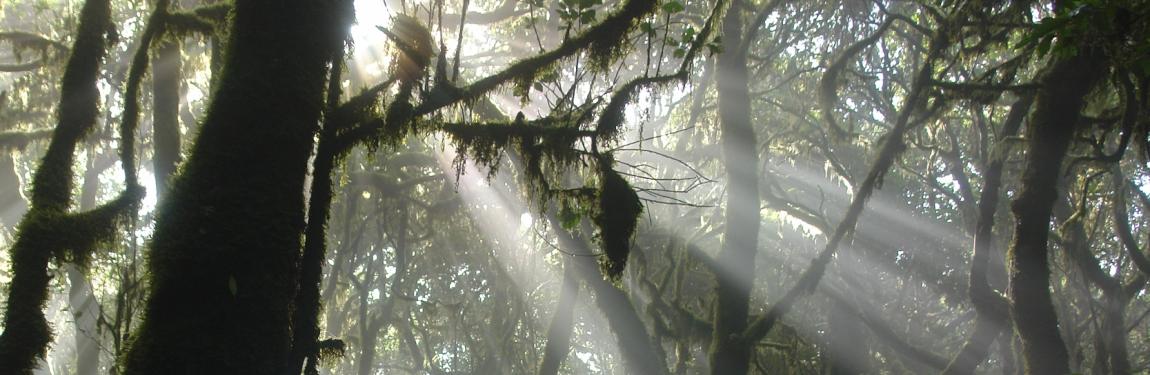 Wandelen, La Gomera, natuur, ontspannen, rust
