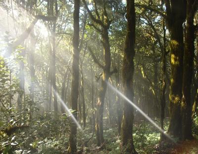 La Gomera, parque Garajonay, natuur, wandelen, wandelvakantie